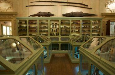 Музей дворца Поджи, Болонья