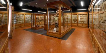 Museum of Zoology, Padua
