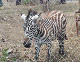 Зоопарк, Неаполь