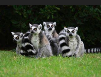 Зоопарк Пунта-Верде, Линьяно-Саббьядоро
