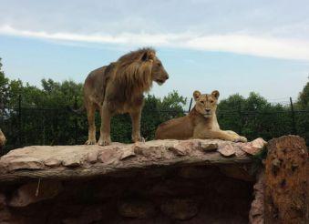 Зоопарк Фальконара, Фальконара-Мариттима