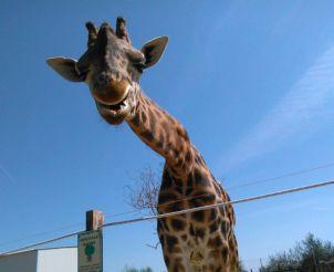 Зоопарк Абруццо, Рокка-Сан-Джованни