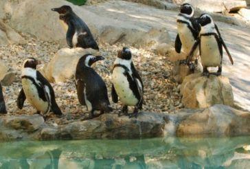 Зоопарк, Пистоя