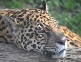 Park Safari delle Langhe, Murazzano