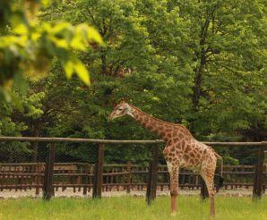 Animal Park Valcorba, Pozzonovo
