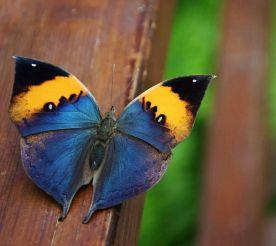 Дом бабочек, Милано-Мариттима