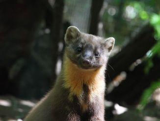 Парк дикой природы «Трясина», Аграте-Контурбия