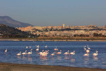 Molentargius Saline Park, Cagliari