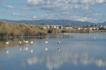 Pond of Molentargius, Cagliari Province