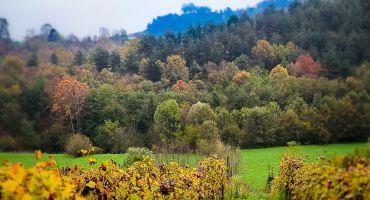 Vasi Forest, Bergamo