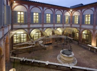 Natural History Museum of the Academy of Fisiocritici, Siena