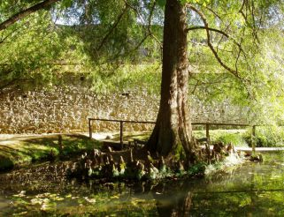 Ботанический сад, Лукка